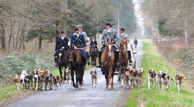La chasse à courre, une tradition aristocratique où tous accourt